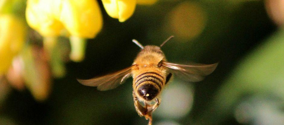 honey bee 68166 1280