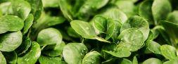 salad 264826 1280