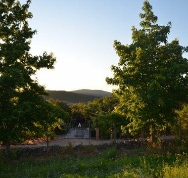 Vista para as encostas da Serra de São Mamede por entre as árvores da Quinta - Natureza em estado puro