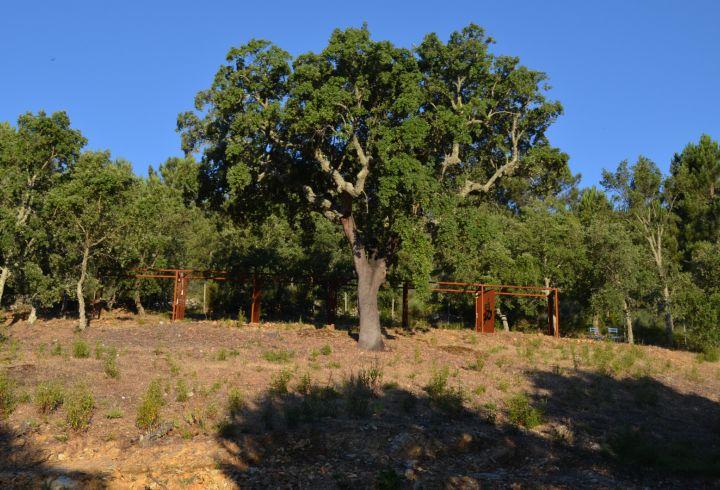 Sobreiro da Quinta do Barrieiro