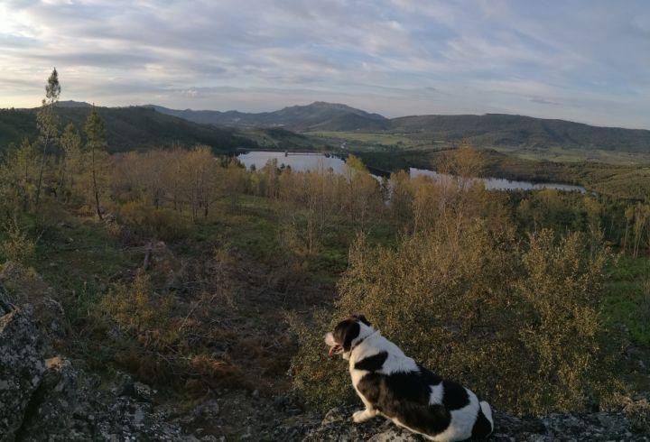 Vista sobre a barragem da Apartadura e o castelo de Marvão na serra de São Mamede e o cão SÁ