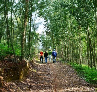 Passeios a pé desde a Quinta do Barrieiro na serra de São Mamede por entre as árvores